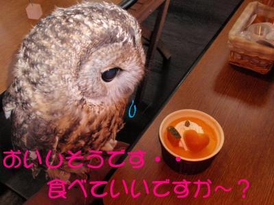 10-14-1-1__20111010145651.jpg