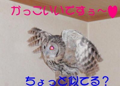 10-8-2-1__20111008103301.jpg