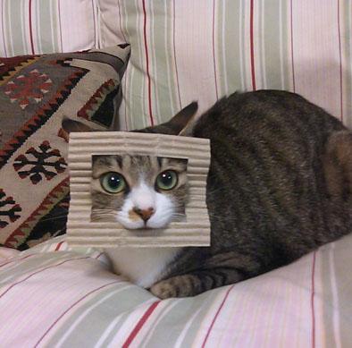 IMG_cat1.jpg