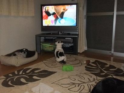 俺テレビ大好きやねん!