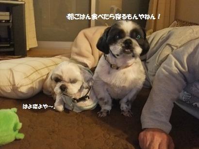 お相撲さんは体づくりの為に食べたらすぐ寝るんやで~