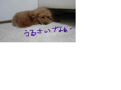 snap_kym728_201212105031.jpg
