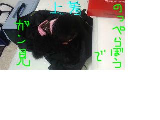 snap_kym728_20121295052.jpg