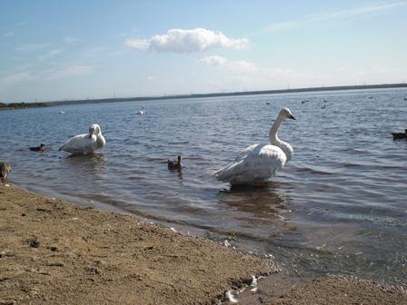 CIMG0383ウトナイ湖