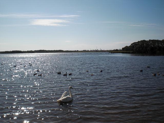 CIMG0384ウトナイ湖