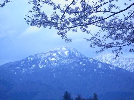 IMGP4214 桜と山