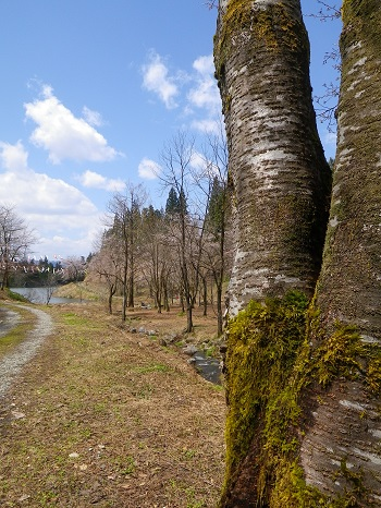 IMGP4269 大崎ダム公園