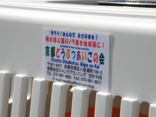 20110317ume (126)