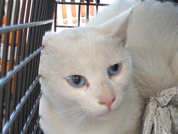 20110625梅猫マリン