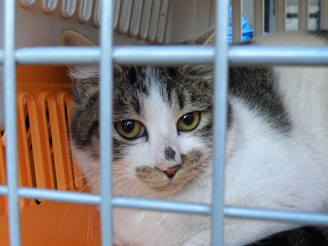 20120126梅猫チュウ