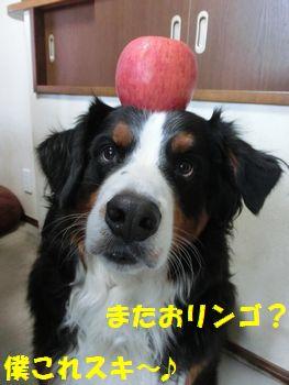またお林檎なのね。