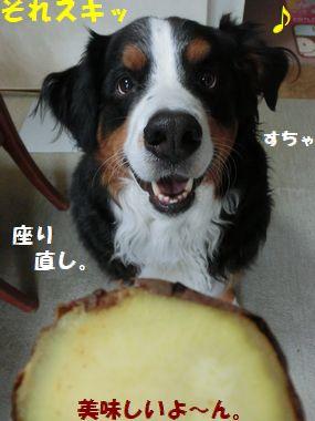 イブイブはお芋でい~の!
