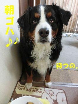 朝のご馳走なの~!!