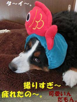 も~鯛撮りすぎ~!