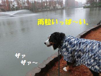 雨たくさんになった・・・。