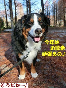 今年もお散歩する~!