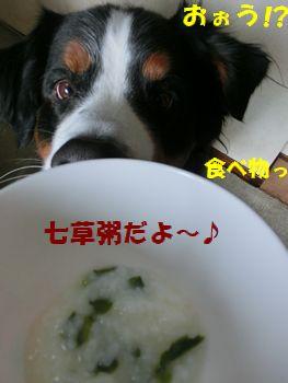 お米なの~!