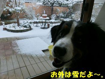 雪ふっちゃったの。