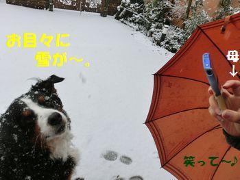 おめめに雪がつもるの~!