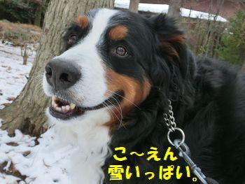 こ~えん雪散歩!