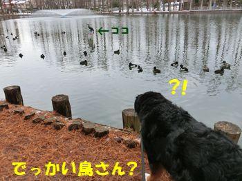 どでっかい鳥さん~!?