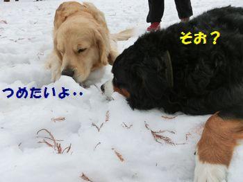 ベリーちゃん雪好きじゃない~!ダメ?
