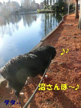 沼を歩くよ~♪