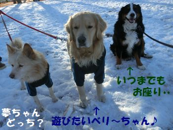雪は休憩するものなの~♪
