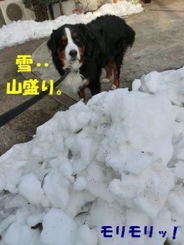 雪も~りもりっ!