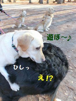 遊ぼうってマロンちゃん~!?