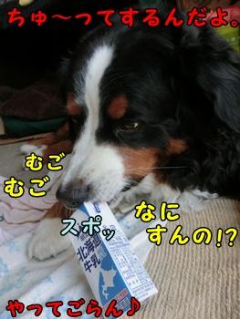 ちゅ~なんてできるか!
