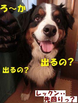 ろ~かでるの?