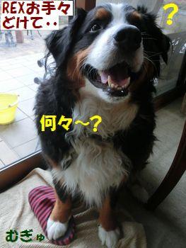 なにいってんの~?