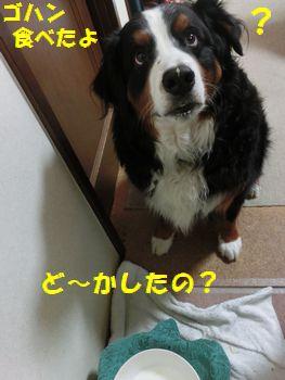 ゴハン食べたよ?ど~したの?