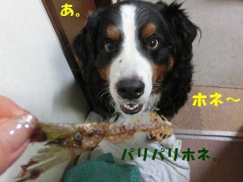骨まで食べるよ~っ!