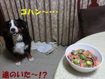 ゴ~ハ~ン~・・・・・