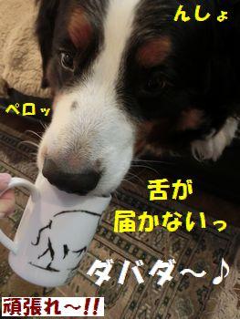 ダバダじゃないよ~!