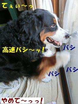 バシバシバシ~ッ!!
