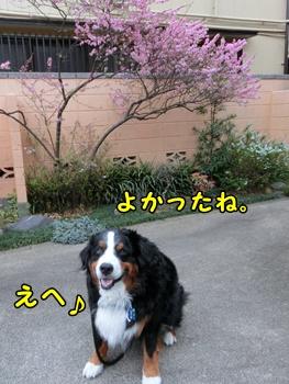 よかったね~!桜♪