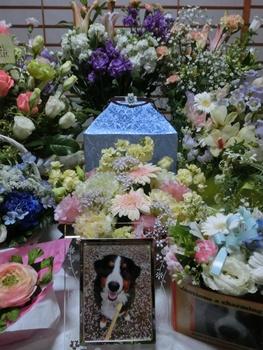 お花にかこまれて。
