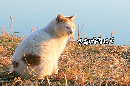 IMG_7633.jpg