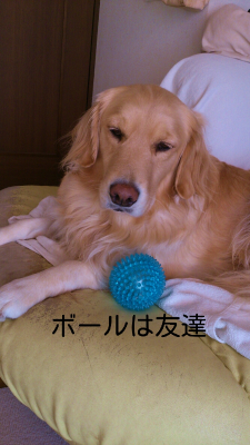 rakugaki_20121216_0001.jpg