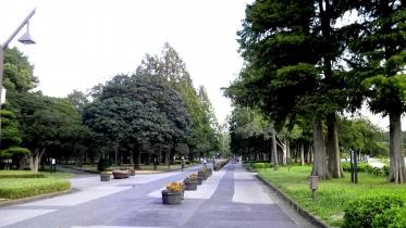 水元公園1-11