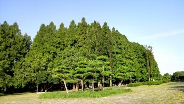 水元公園1-20