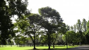 水元公園1-24