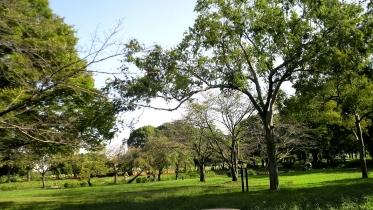 水元公園2-03