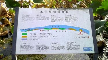 水元公園2-07