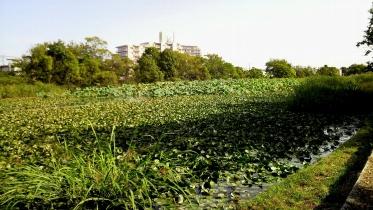 水元公園2-08