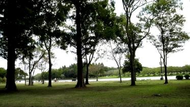 水元公園2-20