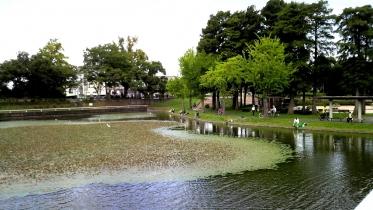 水元公園2-26